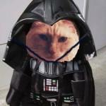 cokiethecat