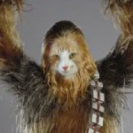 @maxwellpurrs-Max-Chewbacca