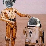 @punkpugs-scifipawtypugs