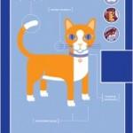 QUIRKNOTES CAT