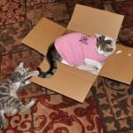 Dis Mancat iz Tuff Enuff to Wear Pink