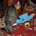 Foster Monster Caught Killing Spock Teddy