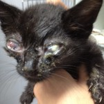 Pets Alive Saves ALL NYC Kittens
