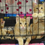 1x1 kittens waiting for adopshuns