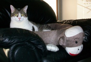 sock monkey bed