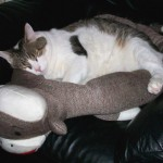 Sock Monkey Pet Bed