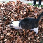Playing in a Leaf Pile