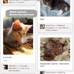 Pinterest Kittehs Want Squirrels