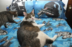 Star Wars Sheets