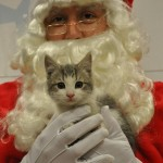 'Tis Better to Pin than to Receive this Holiday: Pin It for Pets Photos Raise Money to Help Save Homeless Pets