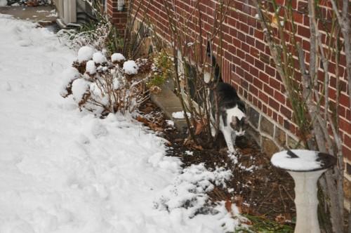 Yucky Snow