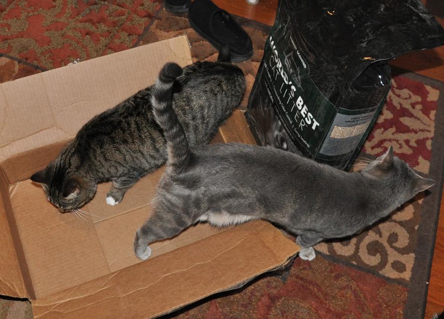 Worlds best cat litter forest review