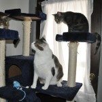 Playin on Da Cat Tree wif da Monsters
