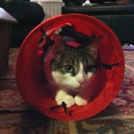 The Kong Kitty Tunnel iz a Hit