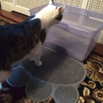 Two Meows Paw Shaped Cat Litter Mat Review