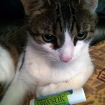 Organic Pawstik For Doggy Paw Paws #Review & #GiveAway #OrganicPawstikPawBalm