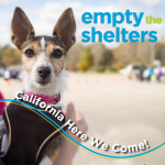 #EmptyTheShelters is Heading West