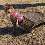 Cool Pet Walking Jacket Donated by @snuffynorton for #SCIFIpawty