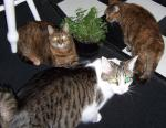 What Happened to da Catnip Plant?!