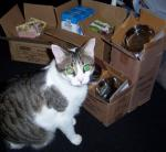 OMC OurPets Did Sends Donations For Kitties in da Shelter