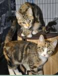 Why One by One Cat Rescue?